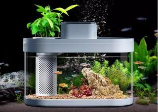 аквариум ксиоми